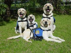 Image courtesy of www.assistancedogs.org.au