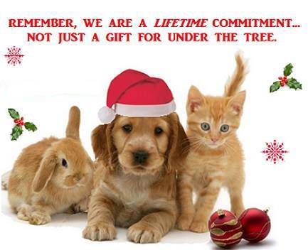 Xmas gifts for pets