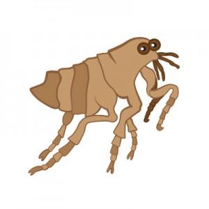 flea-4blog