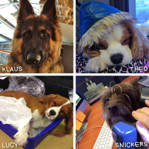 Some of the vet-n-pet DIRECT canine team members!