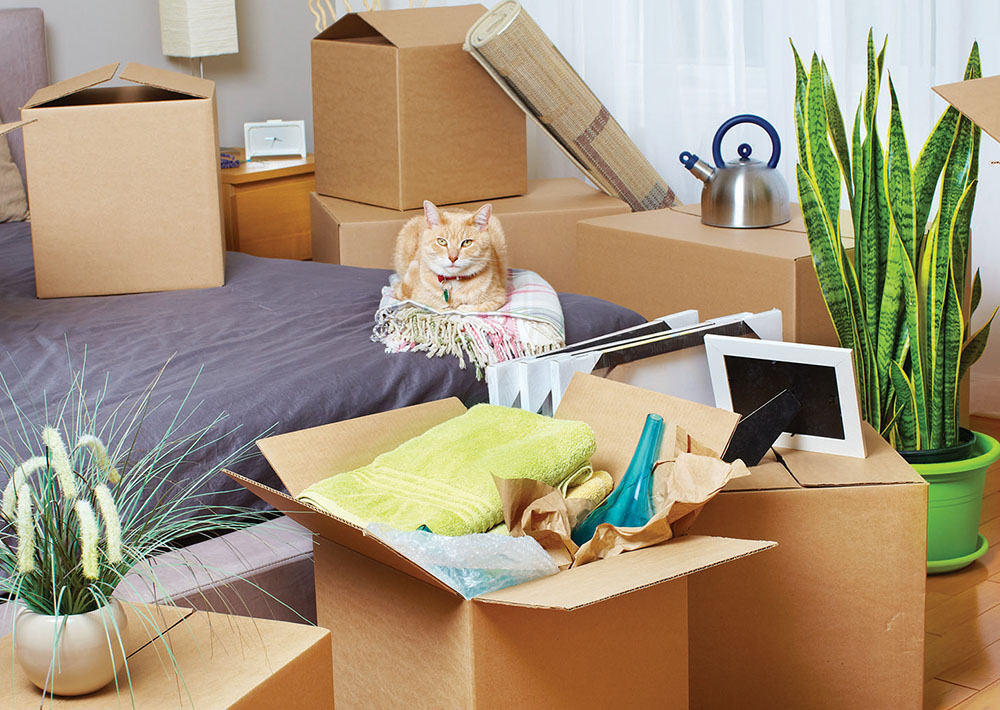 Moving boxes in new house vet n pet direct blog for Used boxes for moving house